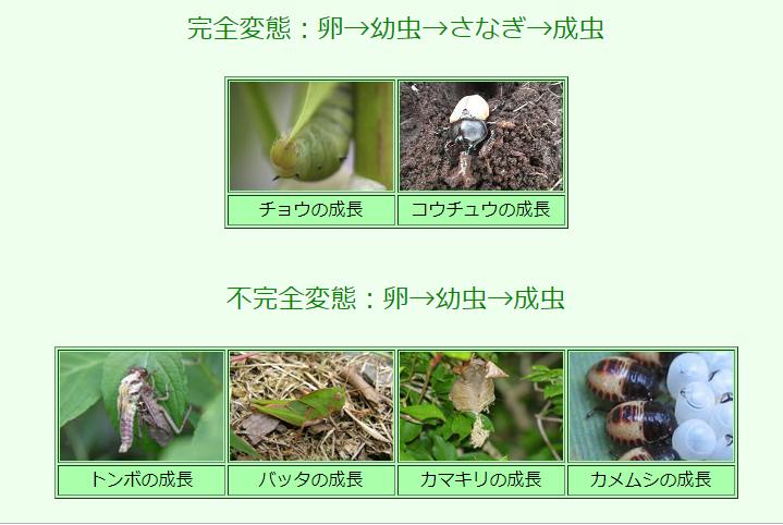 虫の成長過程